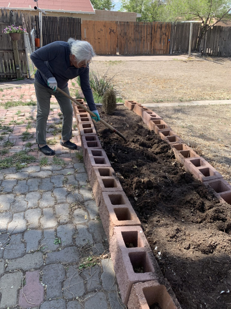 man digs soil into raised bed