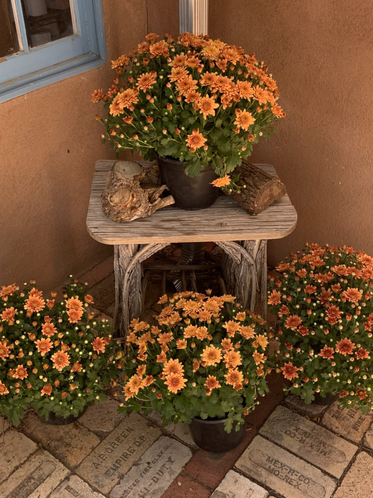 fall mums display on rustic table