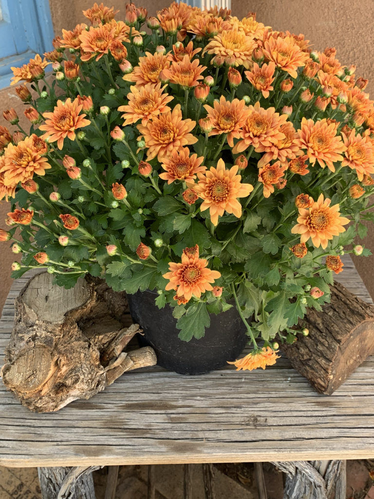 orange mums on rustic table with logs