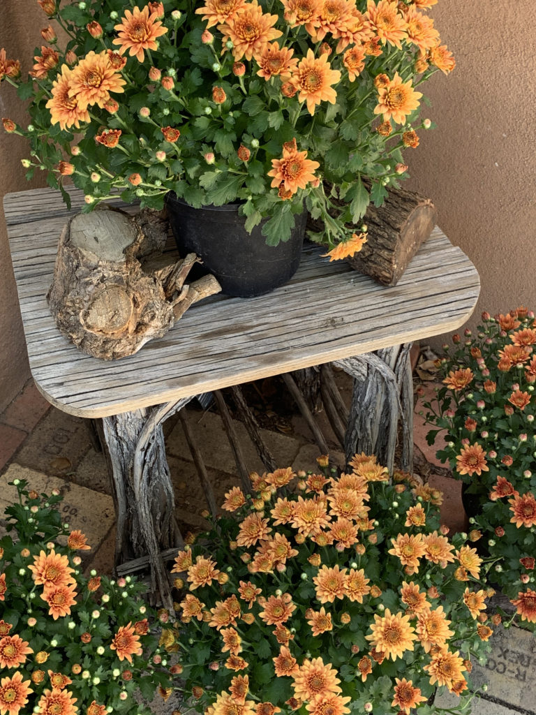 fall mums on rustic wood table